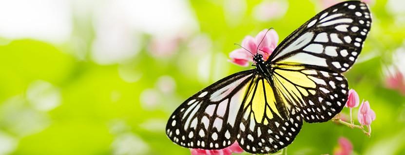 Schmetterling - Tschirschnitz Psychotherapie für Kinder, Jugendliche, Erwachsene
