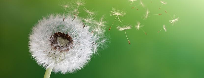 Pusteblume - Tschirschnitz Psychotherapie für Kinder, Jugendliche, Erwachsene